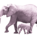 Elefanten01