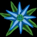 bluete1