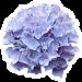 bluete aufkleber2